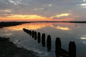 pagham-harbour-local-nature-reserve West Sussex